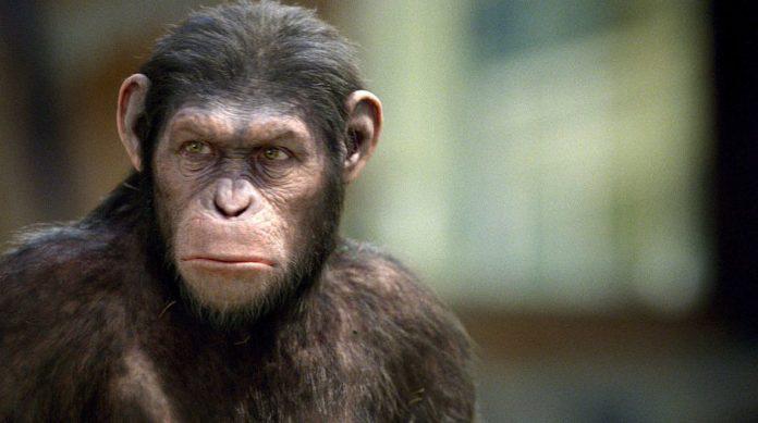 Novo filme Planeta dos Macacos