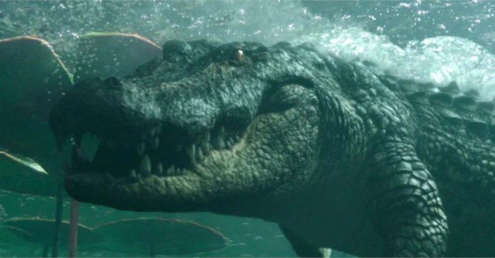 Jurassic Park vira Trends após as fotos do massivo Gator da Flórida se tornarem virais
