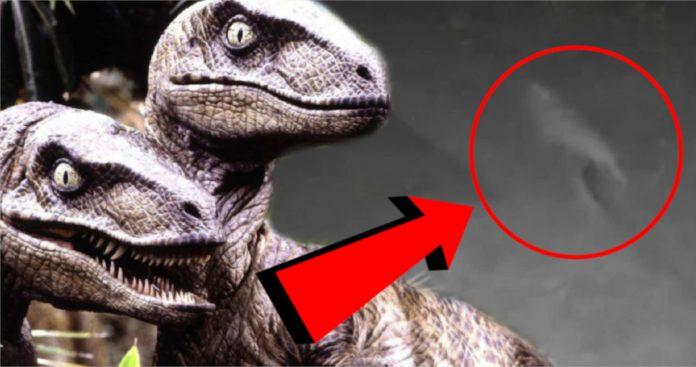 Mulher da Flórida diz que pegou um bebê dinossauro correndo em seu quintal